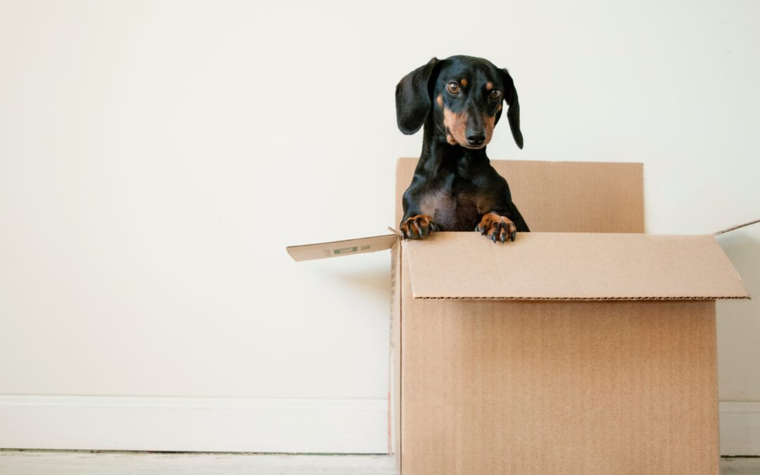Make moving easy: our tips for a smooth move