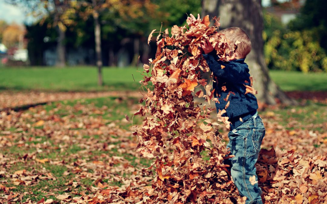 So long summer, hello Autumn! All the best events happening in our area this season